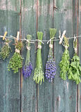 Drying herbs Stock Photo