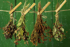 Drying herbs Stock Images