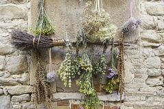 Drying herbs Royalty Free Stock Image