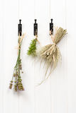 Drying Herbs & Lavender Stock Photography