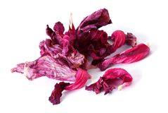 Drying hibiscus tea Royalty Free Stock Images