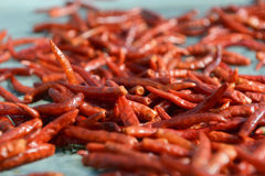 Drying hot peppers Royalty Free Stock Images