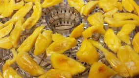 Drying jackfruit Royalty Free Stock Image
