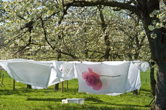 Drying laundry in a fruit orchard, Netherlands Stock Photos
