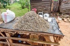 Drying little regional fish from Lake Victoria in Bukoba, Tanzan Stock Photo