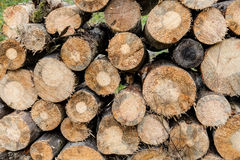 Drying logs for firewood Stock Photography