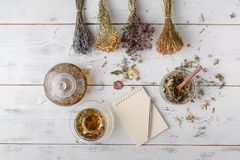 Drying medical herbs : echinacea,melissa,chamomile,dill. Drying medical herbs : echinacea or melissa, chamomile, dill royalty free stock image