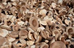 Drying mushroom Royalty Free Stock Photos