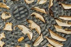 Drying mushrooms Royalty Free Stock Image