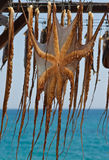 Drying octopus stock image