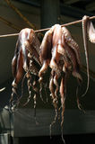 Drying octopus Stock Photo