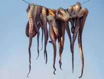 Drying Octopus Arms. On Lefkada Island, Traditional Greek Seafood Prepared On A Grill, Greece Royalty Free Stock Photo