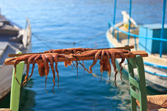 Drying octopus on Crete, Greece Stock Images