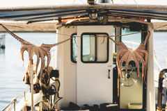 Drying octopus on fisherman boat in Greece Crete Stock Photography
