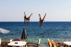 Drying octopus on sun. Samos island, Greece. Stock Photo