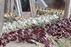 Drying onions Stock Photos