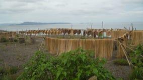 Drying palm fibers. stock video