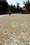Drying peanuts Royalty Free Stock Photos