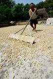 Drying peanuts Stock Photo