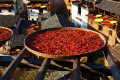 Drying peppers Stock Image