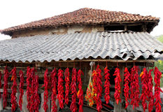 Drying peppers in an old traditional manner Stock Photo