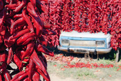 Drying peppers in the traditional way Stock Images