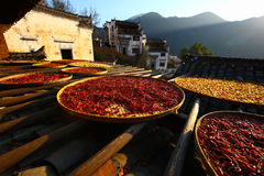 Drying peppers in village Royalty Free Stock Photography