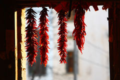 Drying peppers Stock Photos