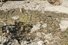 Drying pond of a riverbed Royalty Free Stock Image
