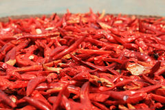 Drying red chili peppers Royalty Free Stock Photos