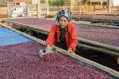 Free Drying Red Coffee Berries Stock Photography - 38315122