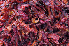 Drying red hot chili peppers at Chichicastenango market. In Guatemala Stock Image
