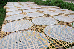 Drying rice paper. Outside in the mekong delta Royalty Free Stock Photography