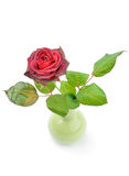 Drying rose in a vase Stock Photo
