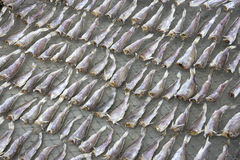 Drying of Salted Fish Royalty Free Stock Photos