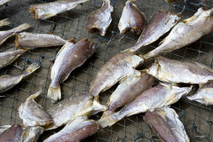 Drying of Salted Fish Royalty Free Stock Image