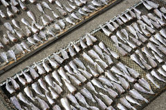 Drying of Salted Fish Royalty Free Stock Images