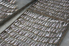 Drying of Salted Fish Royalty Free Stock Photo