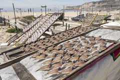 Drying and Selling Fish in Nazare Stock Images