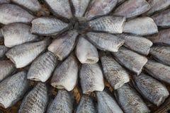 Drying snakeskin gourami fishes Royalty Free Stock Image