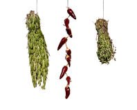 Drying spices Stock Photography