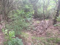Drying spring ravine. Empty ravine with fallen tree branches and wild brush Stock Image