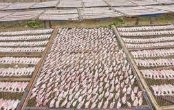 Drying squid on the net Stock Photo
