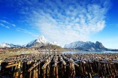 Drying stock fish in Norway, Lofoten Royalty Free Stock Photos