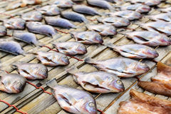 Drying stock fish in Thailand Royalty Free Stock Image