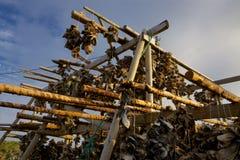 Drying stockfish Royalty Free Stock Image