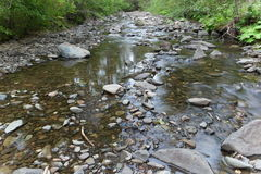Drying stream bed Royalty Free Stock Photography