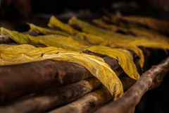 Drying tobacco leaves. Tobacco leaves spread out to dry in Vinales, Cuba royalty free stock photo