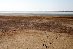 Drying up estuary with healing mud and red algae at sunset stock photos