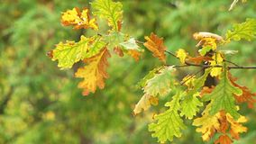 Drying Up Leaves stock footage